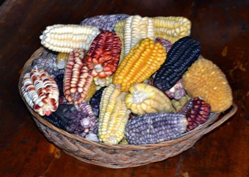 Maïs du Pérou