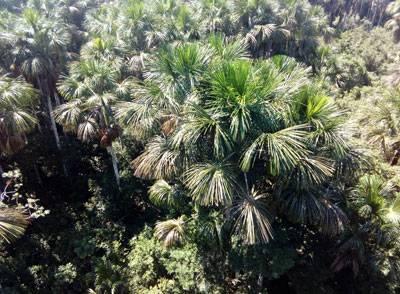 découverte de la forêt amazonienne